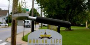 Waking Life in West Asheville. Photo from Asheville Blog.